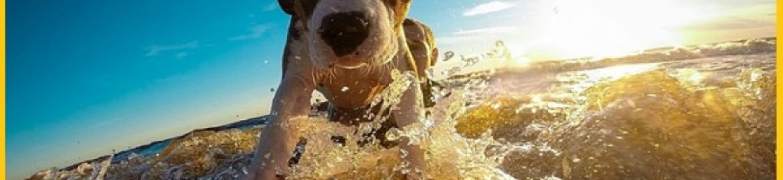 Un italiano su tre porta il suo amico animale in vacanza