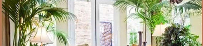 Le piante di casa: abbelliscono e purificano l'ambiente