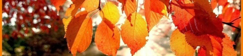 Idee per passare un autunno ricco di creatività