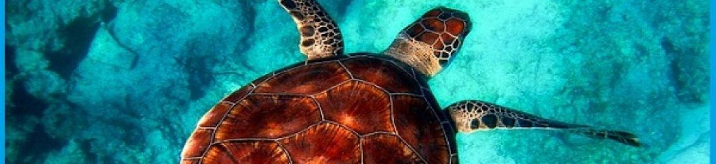 La mappatura delle tartarughe, i pescatori possono segnalarle.